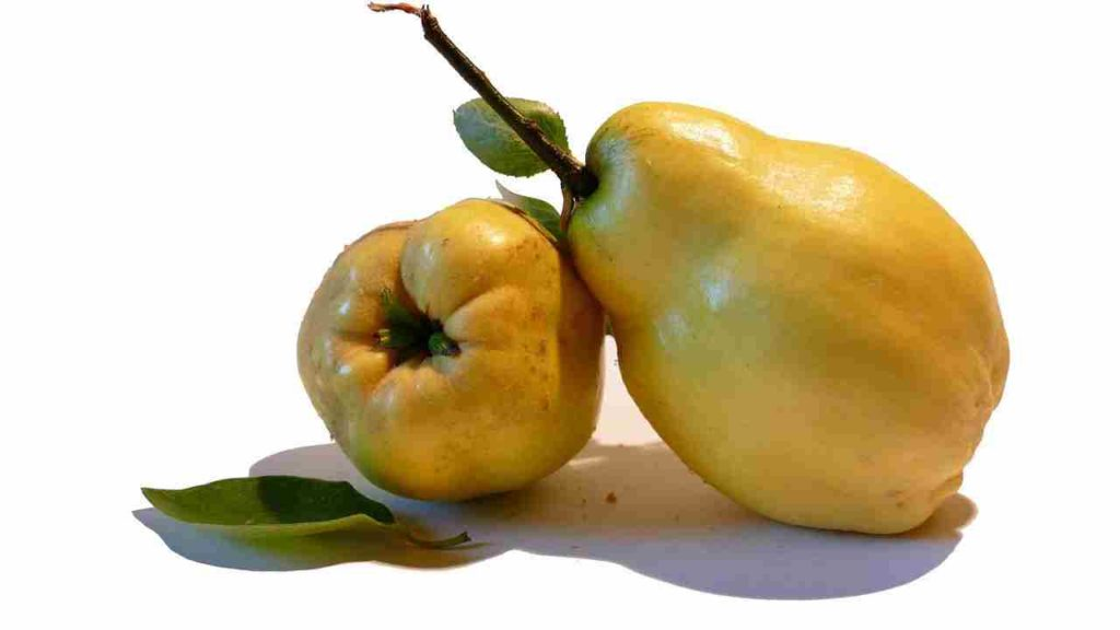 Fruits Name in English Quince