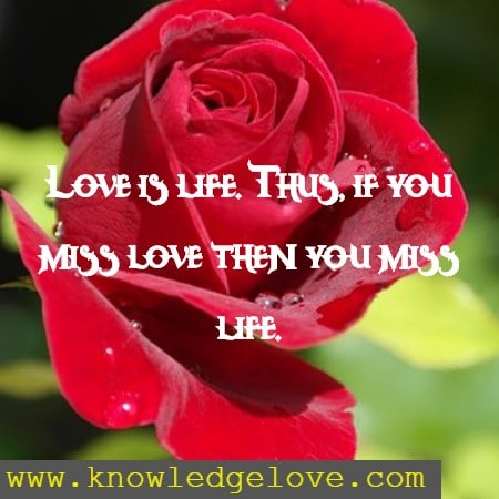 Short Love Life Quotes