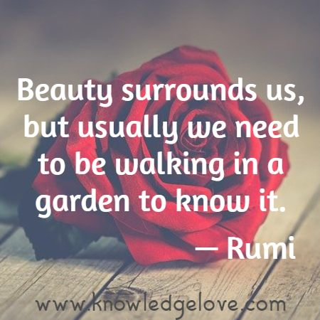 Beauty surrounds us, but usually we need to be walking in a garden to know it.