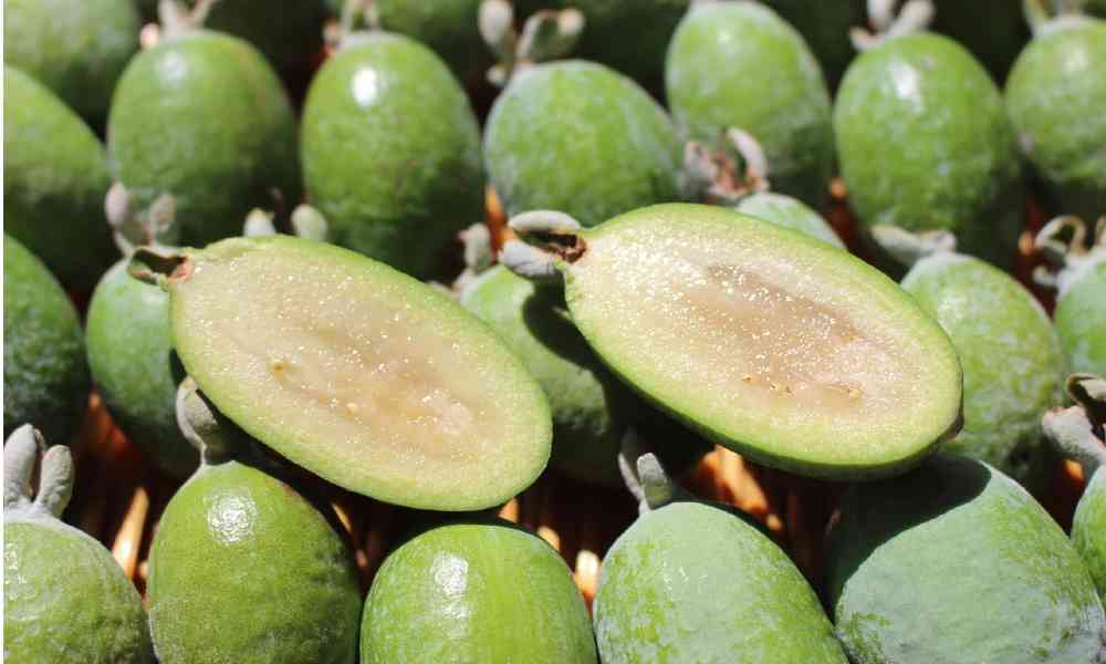 fruits name in hindi - फैजोआ ( Feijoa )