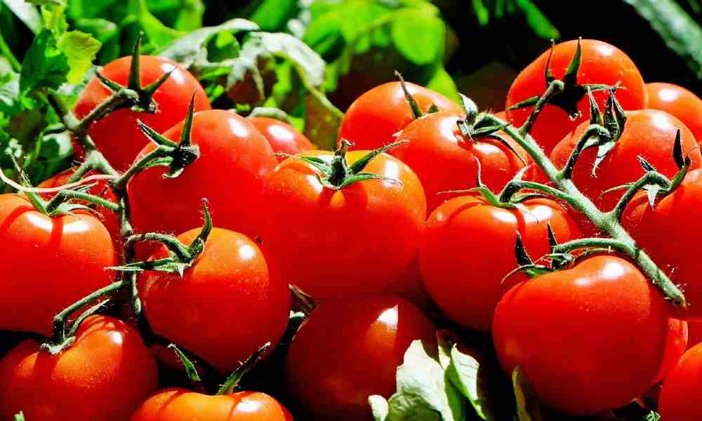 fruits name in hindi and english with images of Tomato : Tamatar ( टमाटर )