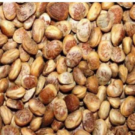 Cudpahnut (Chironji)