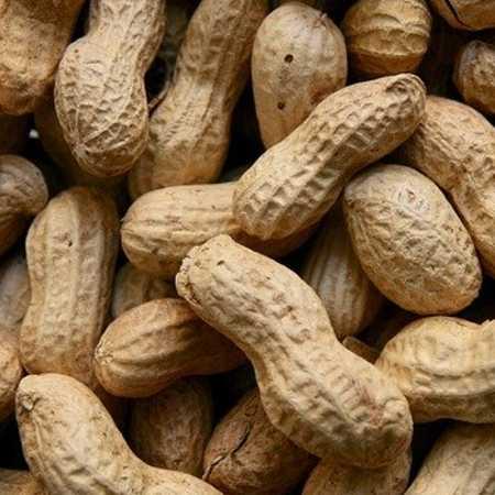 Groundnuts, Peanuts