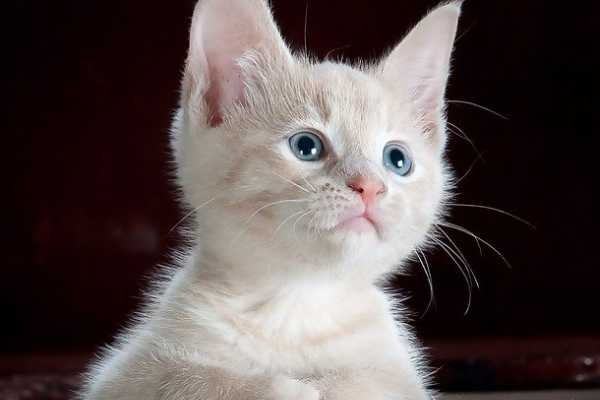 Domestic Animals Name - Cat