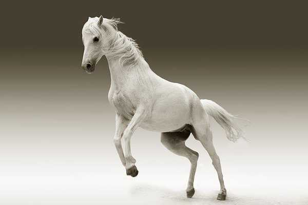 Domestic Animals name - Horse