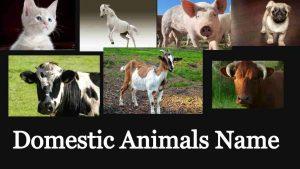 Domestic Animals Name