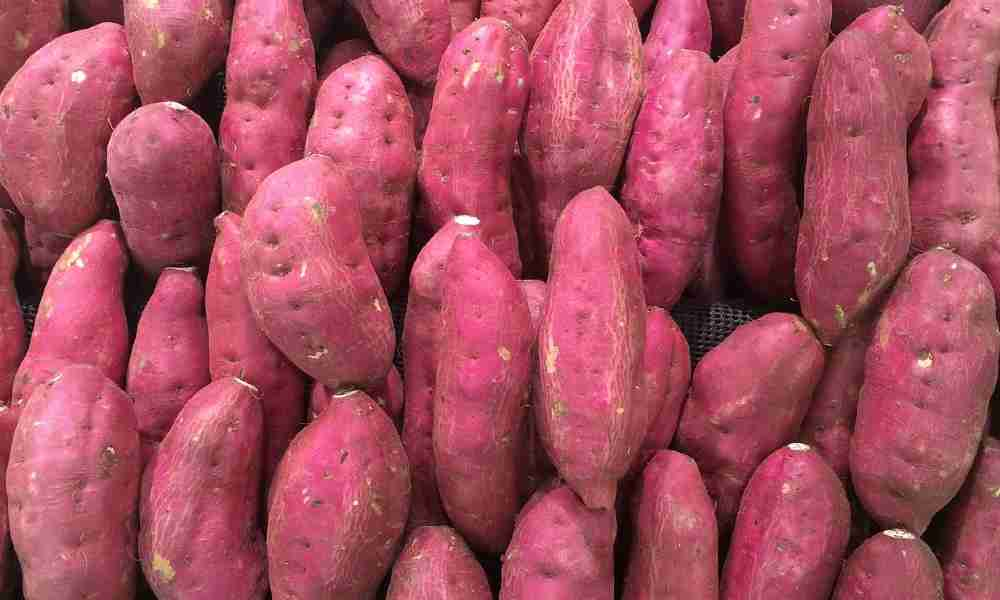 शकरकंद - Sweet Potato