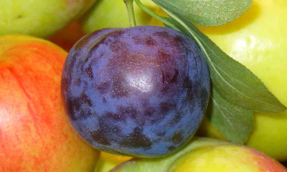 fruits name in hindi - prune - alubukhara