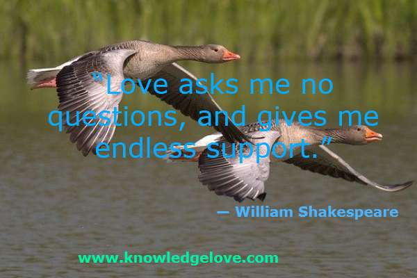 Love asks me no questions, and gives me endless support