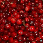 Cranberry Meaning in Hindi