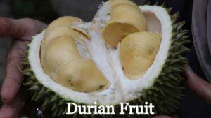 Durian Fruit in Hindi
