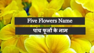 Five Flowers Name