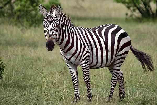 five wild animals name - zebra