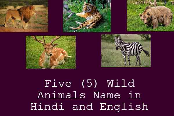 Five (5) Wild Animals Name in Hindi and English