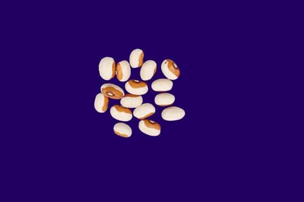 Yellow eye bean