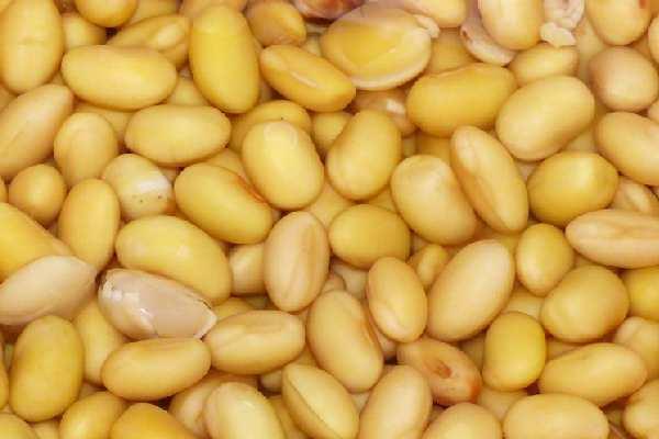 Mayocoba / Yellow bean - पिली बीन