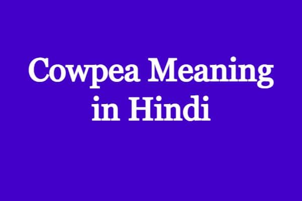 cowpea meaning in hindi